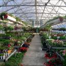 Выращивание цветов и рассады в промышленных теплицах